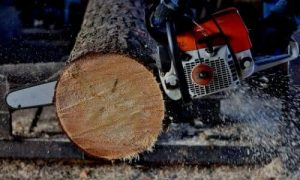 wood slices Cut with chainsaw